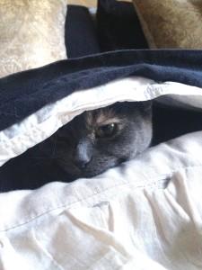 Cat in a Duvet Cover